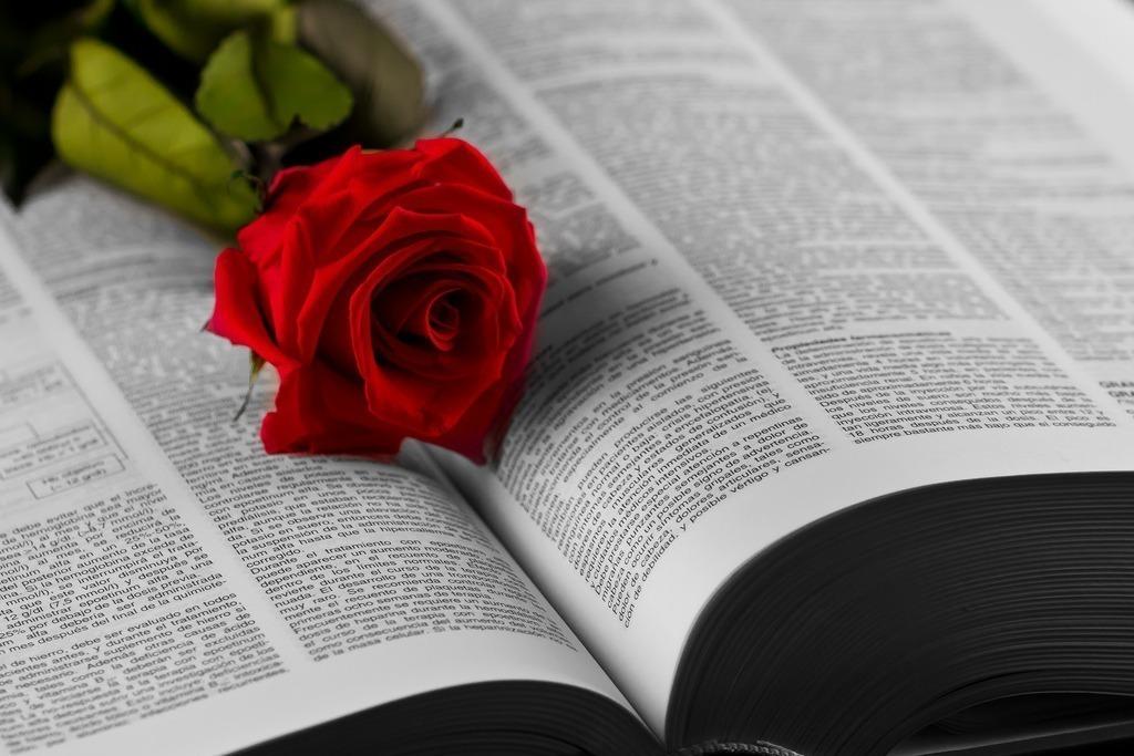 Enviar rosa de Sant Jordi a domicilio